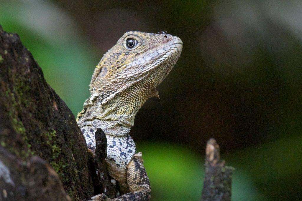 Water Dragon (Photo: Jun Matsui)